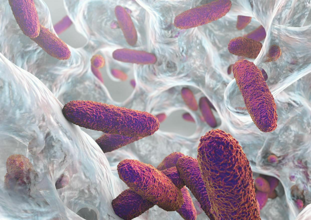 EXPERTS SPEAK – What you need to know about the components and functions of a bacterial biofilm matrix