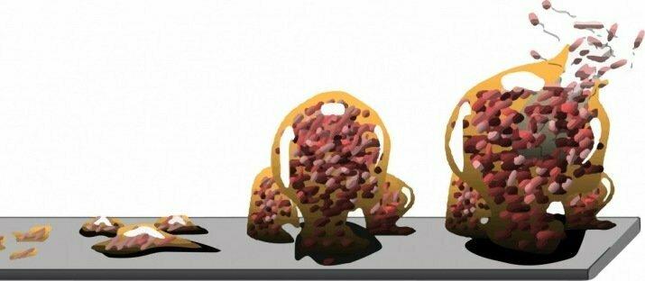 Enzymen breken biofilm veilig af