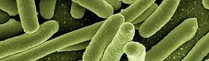 Escherichia Coli: characteristics, pathogenicity and prevention