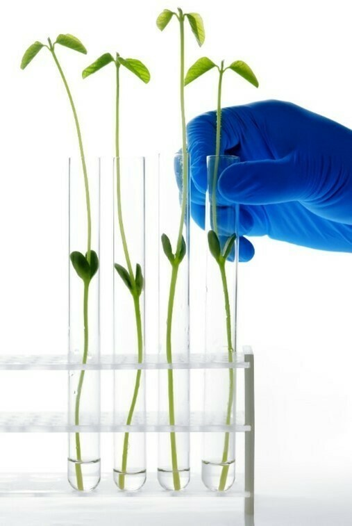 Sustainable chemistry and more